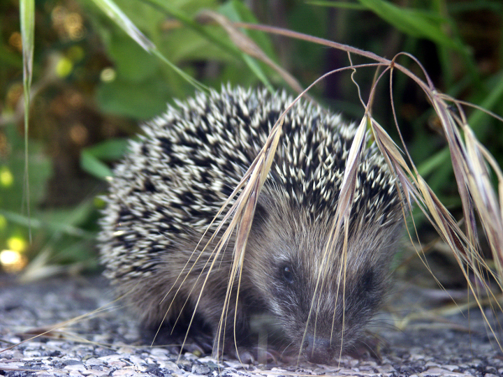 Fauna-de-LaSelva